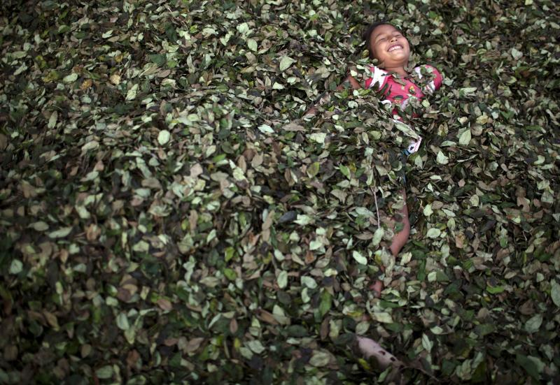 In this Sept. 25, 2013 photo, a girl plays in a bed of coca leaves, in the village of Trincavini in Peru's Pichari district. Pichari lies on the banks of the Apurimac river in a valley that the United Nations says yields 56 percent of Peru's coca leaves, the basis for cocaine. Coca is central to rituals and religion in Andean culture but in recent decades has become more associated with global drug trafficking. (AP Photo/Rodrigo Abd)