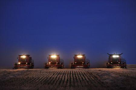 Combine harvesters harvest wheat on the Stephen and Brian Vandervalk farm near Fort MacLeod, Alberta