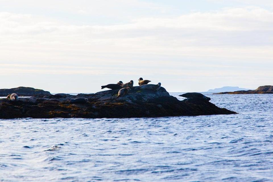 The seals at Eilean Shona are notoriously shy (B Cox)