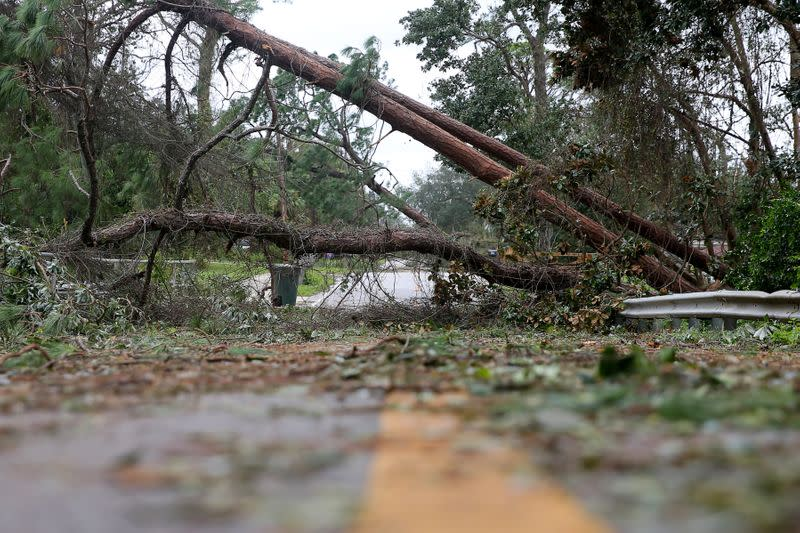 Downed trees block a road after Hurricane Sally in Warrington