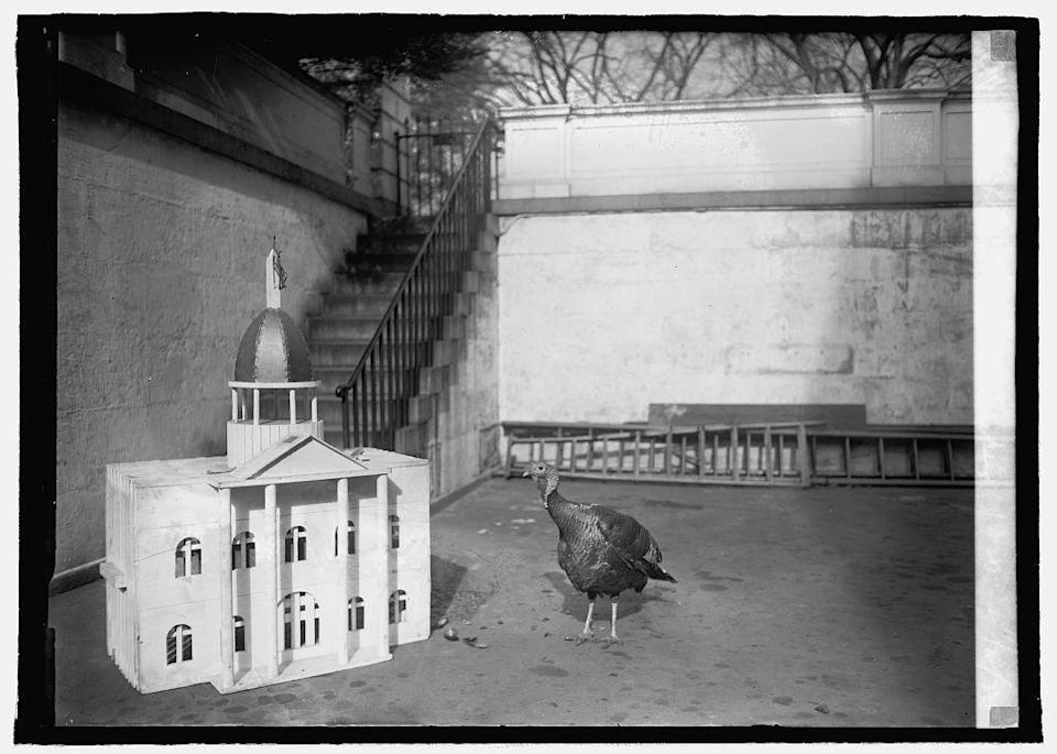 <p>Not much is documented before the year 1920, which was Woodrow Wilson's second to last year in office. Here, a turkey gifted to the White House to serve as the president's Thanksgiving dinner centerpiece traveled in style, thanks to a custom-designed crate complete with its own rotunda. <i>(Photo: Library of Congress)</i></p>