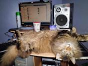 As this photo suggests, cats can literally sleep anywhere.