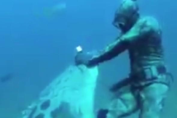 Video: Enormous fish steals startled diver's catch
