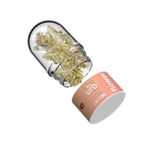 A 5 gram container of White CBG flower covered in D8. Available strains: Tangie, Wedding Cake and Watermelon Zkittlez. Please see www.LiftedMade.com for more information about Lifted Made's delta 8 THC CBG flower, launched under Lifted Made's flagship brand Urb Finest Flowers.
