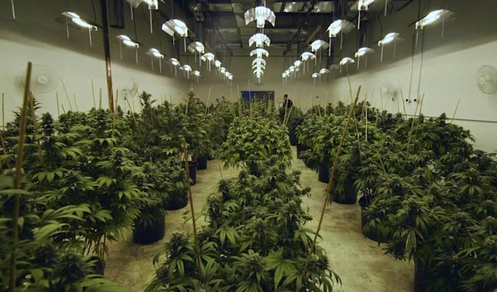 A Major Problem With Colorado's Marijuana Economy Emerged After Weed Went Legal