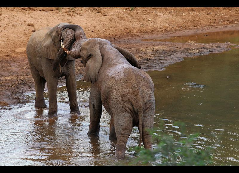 Elephants play in the Luvuvhu river at the Pafuri Game Reserve in South Africa's Kruger National Park. Photo by Cameron Spencer/Getty Images