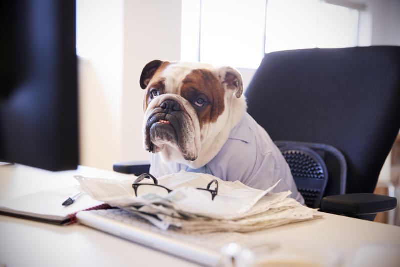 Bulldog Dressed As Businessman Works At Desk On Computer