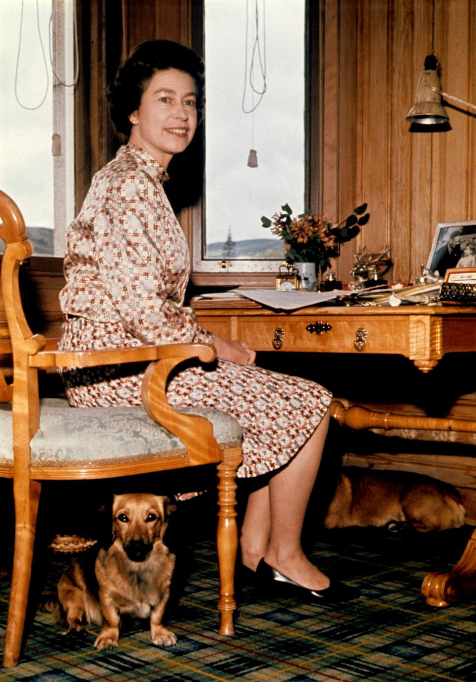 <p>A corgi keeps Queen Elizabeth II company in her study at Balmoral Castle. (PA Archive) </p>