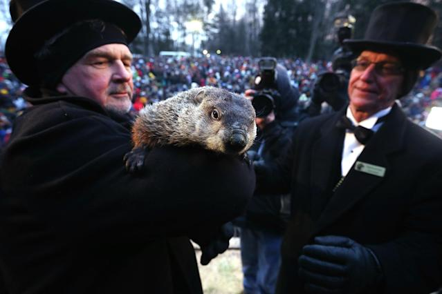 PUNXSUTAWNEY, PA - FEBRUARY 02: Groundhog co-handler John Griffiths (L) holds Punxsutawney Phil as co-handler Ron Ploucha (R) looks on after Phil didn't see his shadow and predicting an early spring during the 127th Groundhog Day Celebration at Gobbler's Knob on February 2, 2013 in Punxsutawney, Pennsylvania. The Punxsutawney 'Inner Circle' claimed that about 35,000 people gathered at the event to watch Phil's annual forecast. (Photo by Alex Wong/Getty Images)