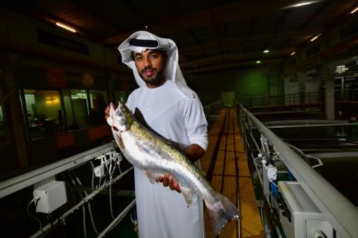 "Fish Farm chief executive Bader bin Mubarak says ""no one could have imagined"" that salmon would be raised in the desert"