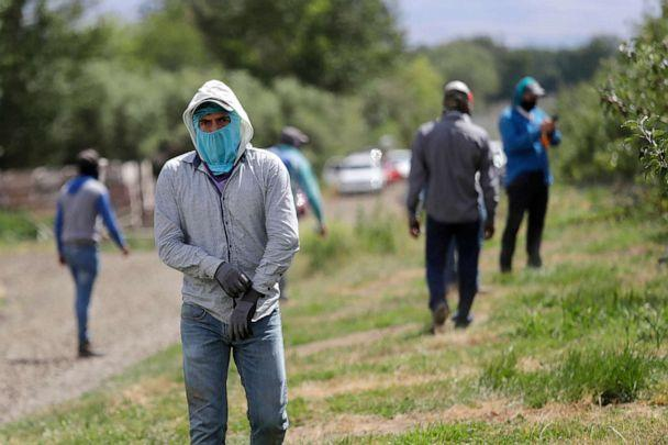 PHOTO:People work at an orchard pull on equipment as they prepare to thin apple trees in Yakima, Wash., June 16, 2020. (Elaine Thompson/AP,FILE)