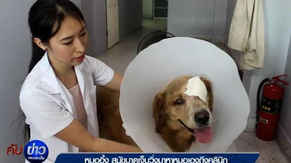 A dog in Thailand took himself to the vet for treatment of a torn eyelid.