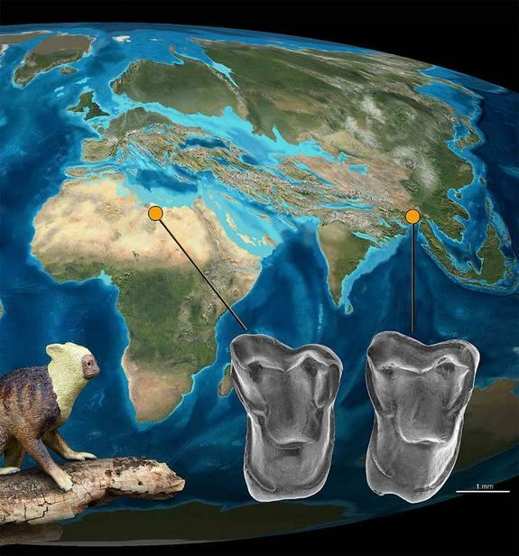New Primate Fossil Points to 'Out of Asia' Theory