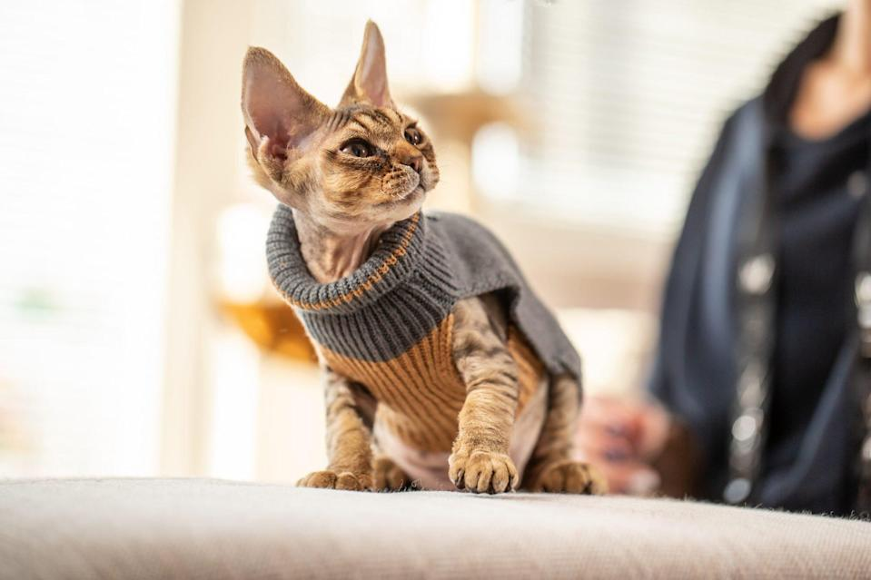 Does Your Cat Need a Sweater?