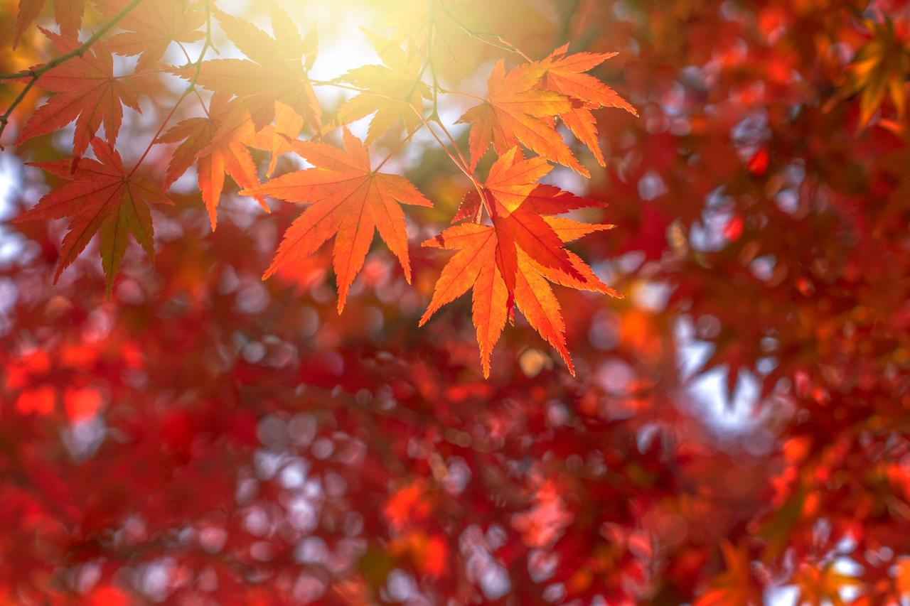 <p>Geminis will truly enjoy taking a spontaneous road trip at any moment. Taking a drive to view the nearest Fall foliage is a must for any Gemini.</p>
