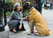 <p>Rachel Brosnahan takes a break from filming to pet an enormous dog passing <em>The Marvelous Mrs. Maisel</em> set on Thursday in downtown N.Y.C.</p>