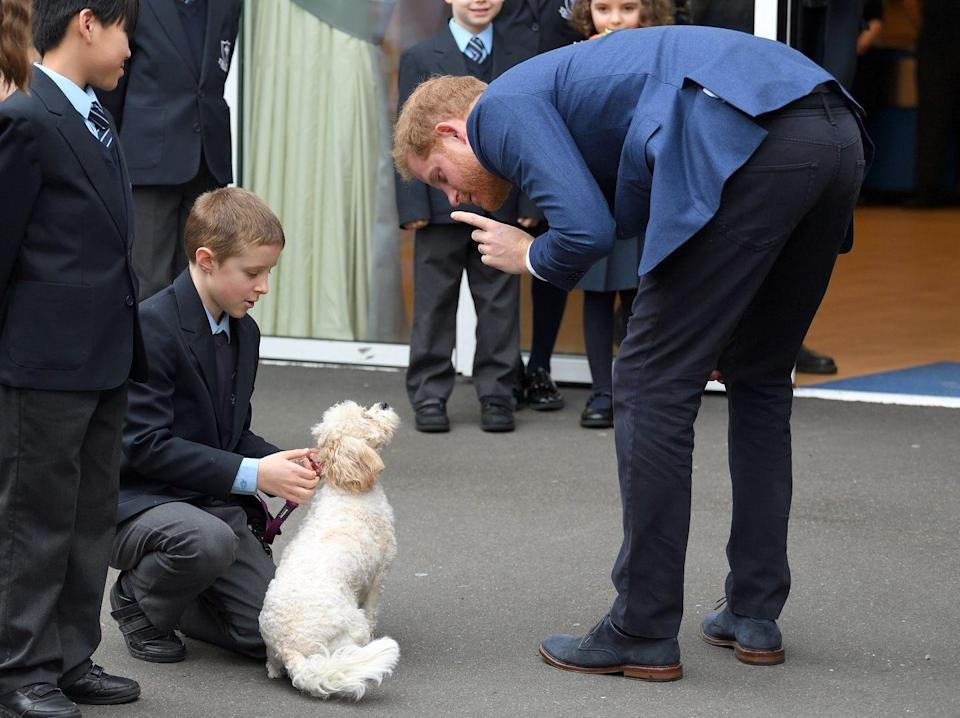 <p>Harry chats with a puppy during a visit to St. Vincent's Catholic Primary School in Acton, England. </p>