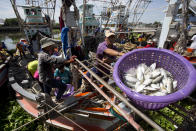 FILE - In this Sept. 3, 2013, file photo, fishermen unload fish following a fishing trip in the Gulf of Thailand in Samut Sakhon Province, west of Bangkok. Thailand reported more than 500 new coronavirus cases on Saturday, Dec. 19, 2020, the highest daily tally in a country that had largely brought the pandemic under control. (AP Photo/Sakchai Lalit, File)