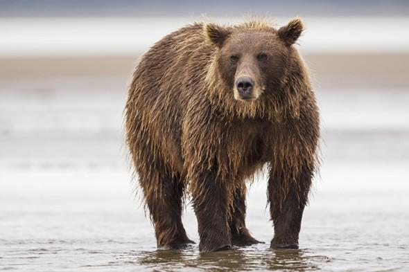 Man fights off huge bear to save family from being attacked