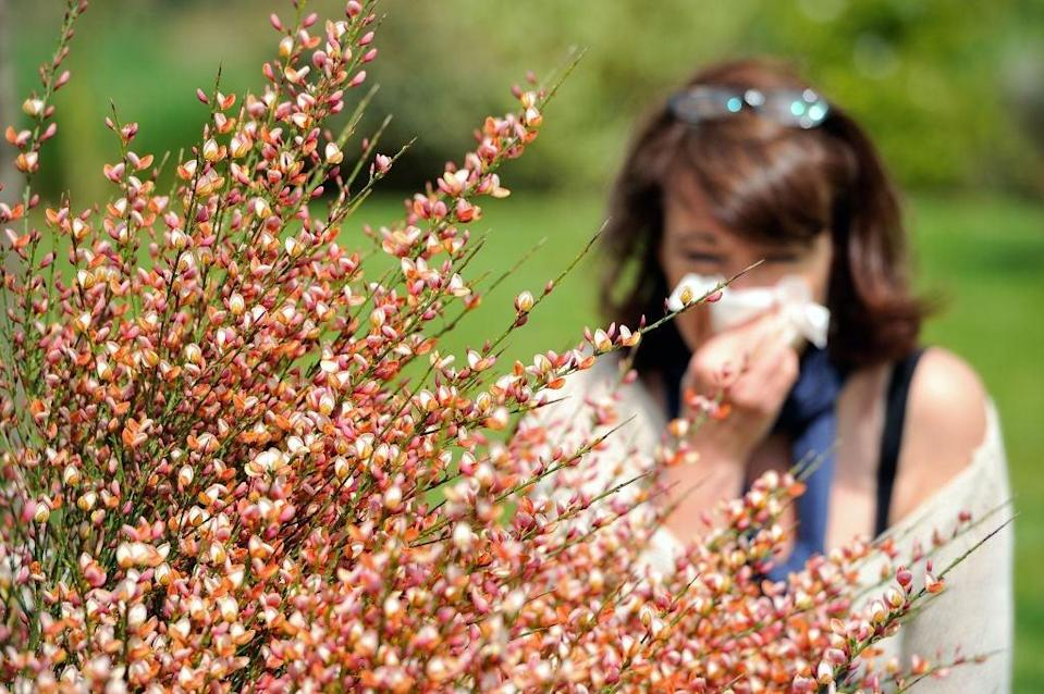 The climate crisis is linked to worsening seasonal allergies  (AFP via Getty Images)
