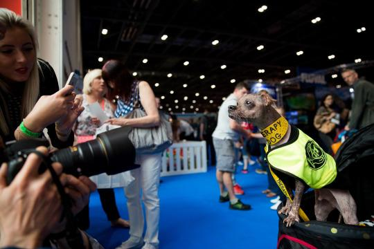 World S Ugliest Pooch Receives Hero Award For His Work