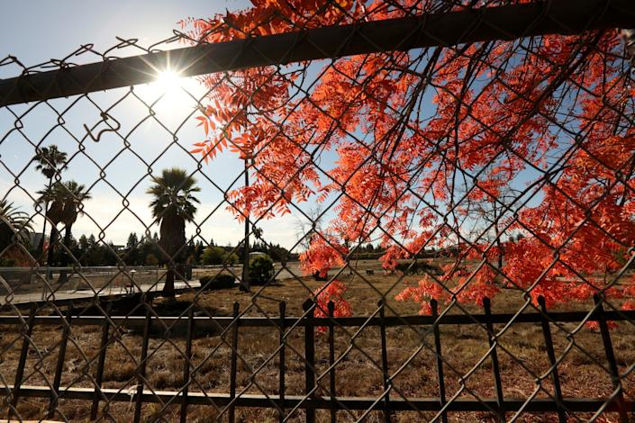 Red tree leaves and brown brush in a vacant lot, as seen from the other side of a chain-link fence