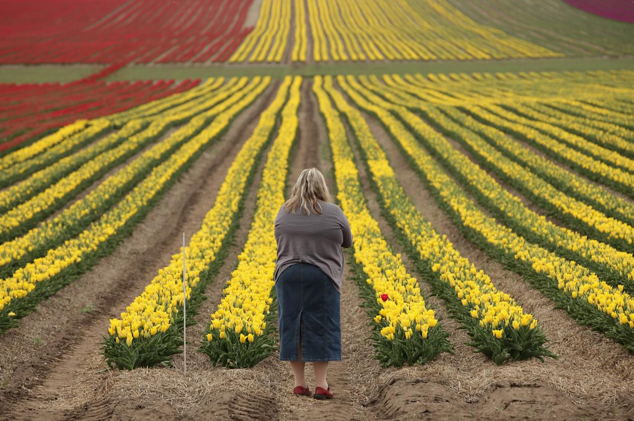 SCHWANEBERG, GERMANY - APRIL 27:  A visitor stops to look out at a tulip field on April 27, 2012 near Schwaneberg, Germany. Spring weather is finally taking hold in Germany with temperatures expected to reach 28 degrees Celsius by the weekend.  (Photo by Sean Gallup/Getty Images)