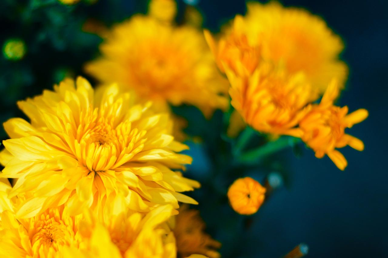 """<p>Chrysanthemums say fall as much as turkey says Thanksgiving. Commonly known as mums, these blooms are an all-time fall favorite for a good reason. <a href=""""https://www.southernliving.com/garden/fall/mum-colors"""">Available in an array of colors</a>, including orange, red, yellow, and white, these autumn blooms are made for container gardens, pumpkin arrangements, and garden beds alike.</p> <p><a href=""""https://www.southernliving.com/home-garden/gardens/beginners-guide-growing-mums"""">Learn more</a>.</p>"""