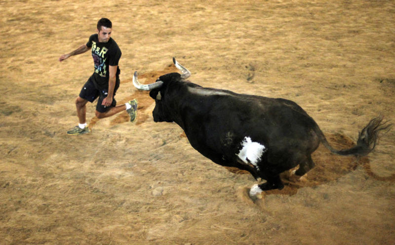 CORRECTS TIME SCALE TO READ:  WHO HAS KILLED TWO PEOPLE IN THE ARENA AND INJURED FIVE OTHERS OVER THE YEARS -  In this photo taken on Sept. 9, 2011, a reveler runs away from 'Raton' the killer bull in the early hours of Sunday during a festivity in Sueca, near Valencia, Spain, The hulking black and white bull, 'Raton' (Mouse),  a 1,100-pound (500-kilogram) beast who has killed two people in the arena and injured five others over the years at pueblo (village) parties where he's released in a ring and amateur daredevils provoke him so he'll chase them around to the cheers of thousands. Nobody got killed this time. (AP Photo/Alberto Saiz)