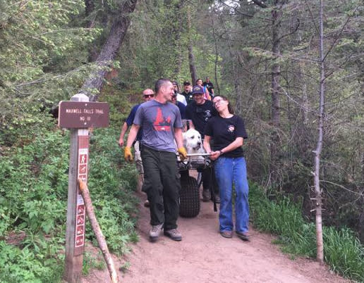 A 120-pound dog was rescued on a stretcher when he was unable to finish his hike. (Photo: Facebook)