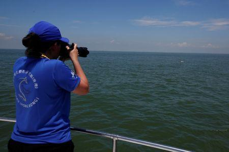 A members of SMRU Consulting, a marine mammal research group, takes photos of a Chinese white dolphin off Lantau island in Hong Kong, China May 30, 2018. Picture taken May 30, 2018. REUTERS/Bobby Yip
