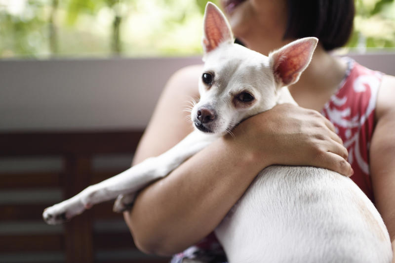 To qualify for coverage, your pet pooch or feline must be between 12 weeks and seven years old, and microchipped.