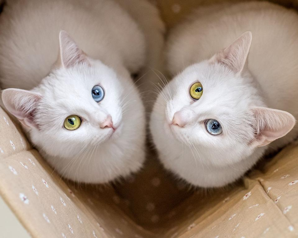 Photos: @sis.twins/Caters News