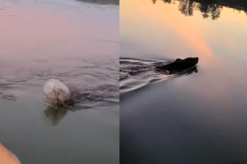 Family Saves Bear From Drowning Which Had Its Head Stuck in Plastic Container