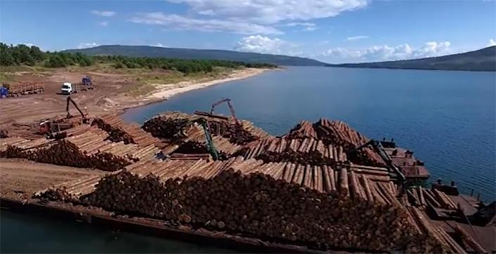 Image: Barge loads of logs from local politician Evgeny Bakurov's forest leases in Irkutsk, Russia, in Sept. 2020. (Earthsight)