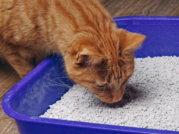 If your cat doesn't like their litter box, they'll often let you know.