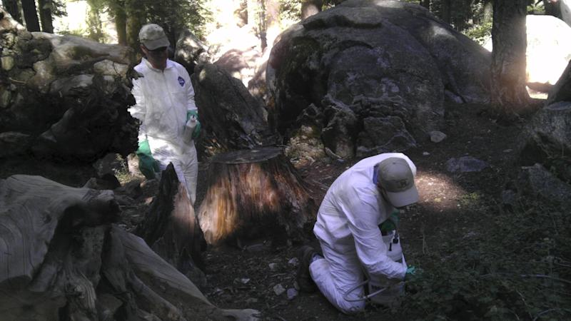 California Department of Public Heath workers treat the ground to ward off fleas at the Crane Flat campground in Yosemite National Park, California  in the August 10, 2015 handout photo released to Reuters August 14, 2015. A second Yosemite National Park campground will be shut down for five days after a pair of dead squirrels were found to be infected with plague, park and California public health officials said on Friday. The closure of Tuolumne Meadows Campground comes a week after a child who camped elsewhere in Yosemite, one of America's top tourist destinations, was hospitalized with the disease. REUTERS/California Department of Public Health/Handout via ReutersATTENTION EDITORS - THIS PICTURE WAS PROVIDED BY A THIRD PARTY. REUTERS IS UNABLE TO INDEPENDENTLY VERIFY THE AUTHENTICITY, CONTENT, LOCATION OR DATE OF THIS IMAGE. FOR EDITORIAL USE ONLY. NOT FOR SALE FOR MARKETING OR ADVERTISING CAMPAIGNS. THIS PICTURE IS DISTRIBUTED EXACTLY AS RECEIVED BY REUTERS, AS A SERVICE TO CLIENTS.