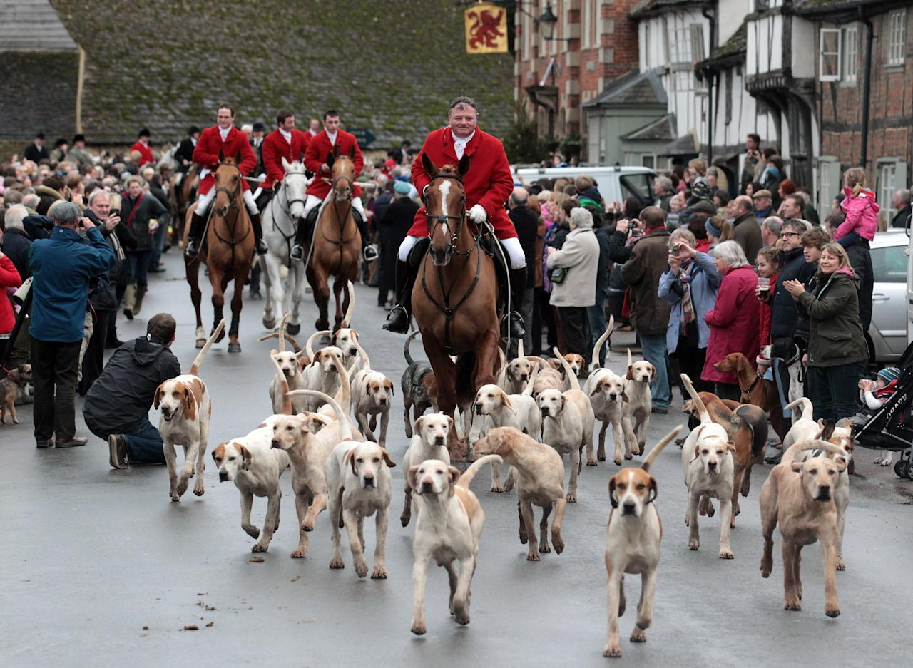 """LACOCK, UNITED KINGDOM - DECEMBER 26:  Jonathon Seed, Joint Master and Huntsman with the Avon Vale Hunt, leads the hounds and fellow riders for their traditional Boxing Day hunt, on December 26, 2011 in Lacock, England. As hundreds of hunts gather today for their traditional Boxing Day meets Agriculture Minister Jim Paice has said the Hunting Act """"simply doesn't work"""" and added that there should be a vote on whether to repeal the act when there was """"time in the parliamentary calendar"""".  (Photo by Matt Cardy/Getty Images)"""