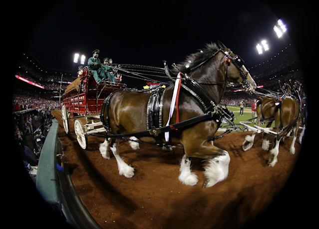 In a photo taken with a fisheye lens, the Budweiser Clydesdales pull a wagon around the warning track in Busch Stadium before Game 5 of baseball's World Series between the St. Louis Cardinals and the Boston Red Sox, Monday, Oct. 28, 2013, in St. Louis. (AP Photo/Matt Slocum)