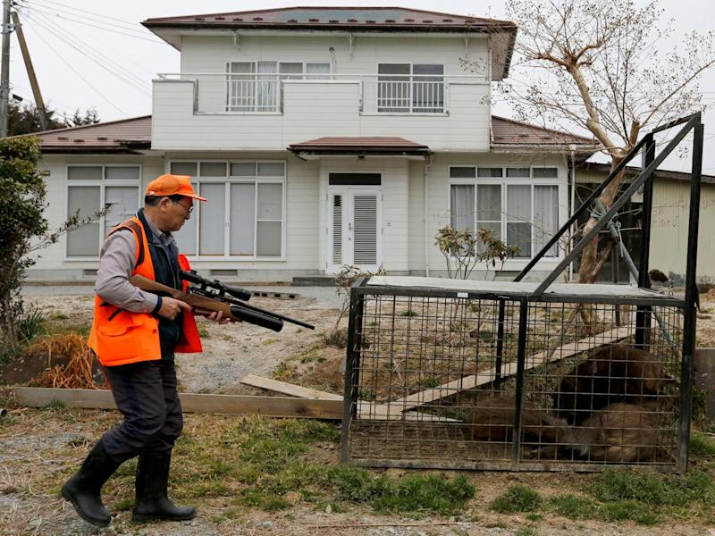 A hunter preparing to shoot trapped wild boars in an evacuation zone near the Fukushima Daiichi nuclear power plant in Namie, Japan, on 2 March (Reuters)