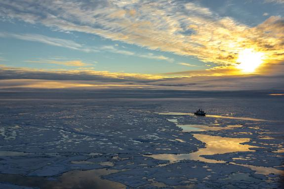 The 'New Arctic': Thinning Ice Is Changing Ecosystem