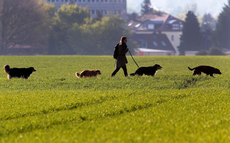People who walk more than four dogs will fall foul of the rules - AP