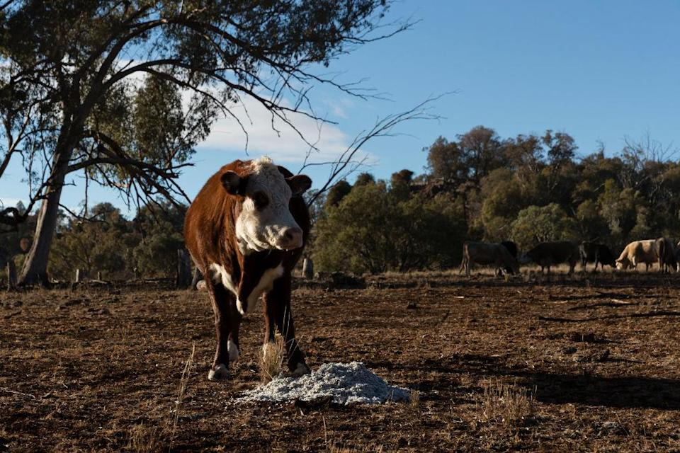 <p>Farmers have previously welcomed government efforts to help, but in the past said packages 'barely touched the sides' [Photo: Getty/Brook Mitchell] </p>