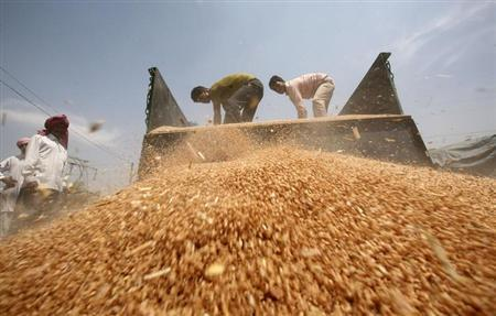 Labourers unload wheat from a tractor trolley at a wholesale grain market on the outskirts of Amritsar May 7, 2013. REUTERS/Munish Sharma/Files