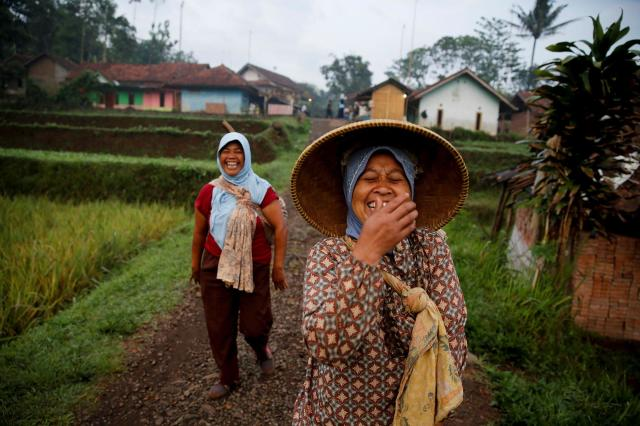 <p>Women share a joke as they walk to a paddy field in Cikawao village of Majalaya, West Java province, Indonesia, Oct. 12, 2017. (Photo: Beawiharta/Reuters) </p>