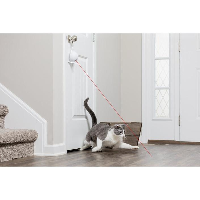 Keep your cat entertained with this safe The Dancing Dot Laser Cat Toy ($19.95). You can set it to work for 15 minutes or even turn on every two hours.