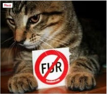 """<div class=""""caption-credit""""> Photo by: iStock</div><div class=""""caption-title"""">Stop Wearing Fur and Leather</div>Think about it. Is it really necessary for animals to die so a person can have a fancy bag or pair of shoes? If we didn't keep reinforcing these inhumane practices by keeping suppliers in the green, there would be no supply and demand. <br> <b>MORE ON BABBLE</b> <br> <a rel=""""nofollow"""" target="""""""" href=""""https://ec.yimg.com/ec?url=http%3a%2f%2fwww.babble.com%2fpets%2f16-reasons-why-cats-are-better-than-people%2f%3fcmp%3dELP%7Cbbl%7Clp%7CYahooShine%7CMain%7C%7C050613%7C%7CBeKindToAnimalsWeek10ThingsYouCanDoRightNow%7CfamE%7C%7C%7C%26quot%3b%26gt%3b16&t=1521633412&sig=CsLfLKym6OkTs5QYdyRFcw--~D reasons why cats are better than people</a> <br> <a rel=""""nofollow"""" target="""""""" href=""""http://www.babble.com/pets/12-surprising-pets/?cmp=ELP%7Cbbl%7Clp%7CYahooShine%7CMain%7C%7C050613%7C%7CBeKindToAnimalsWeek10ThingsYouCanDoRightNow%7CfamE%7C%7C%7C"""">The 12 strangest family pets from around the world</a> <br>"""