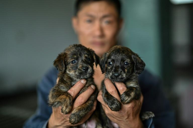 State media said in 2019 that there were 50 million stray animals in China and that number is roughly doubling each year