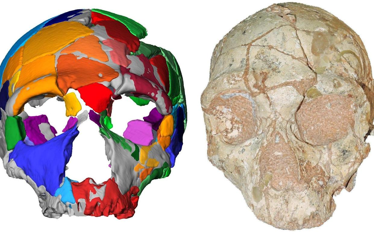 Part of a skull named Apidima 2, discovered in a Greek cave, which, according to a study, had the characteristics of Neanderthal - AFP