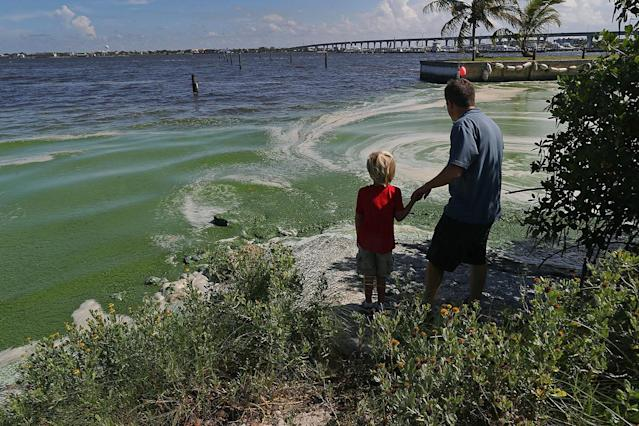 <p>Robert Barstow and son Michael look at algae hugging the shoreline of the St. Lucie River in Stuart, Fla., July 11, 2016. (Photo: Joe Raedle/Getty Images) </p>